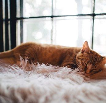 O sono faz bem até para emagrecer e viver mais