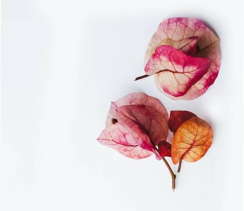secura vaginal atinge mulheres na menopausa